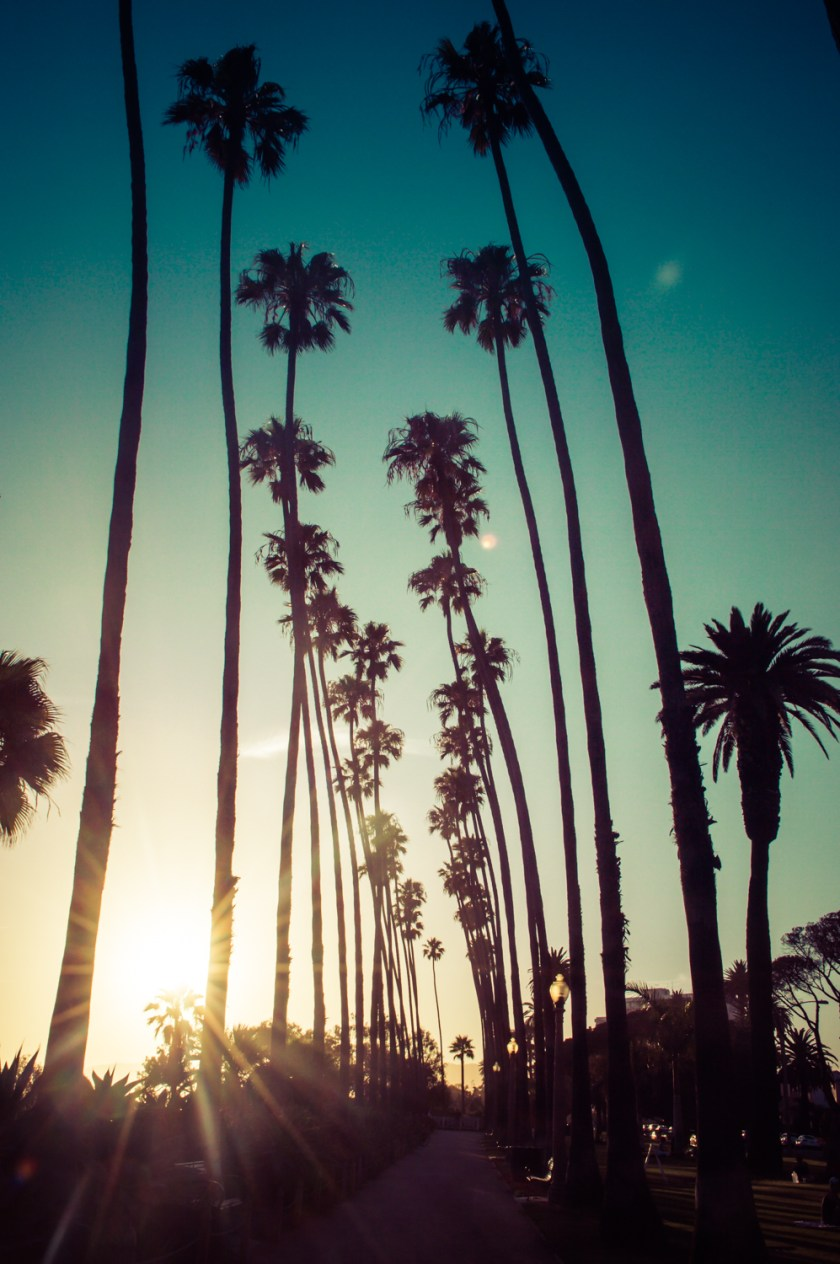 Palm trees in Palisades Park, Santa Monica, California | ColleenWelsch.com