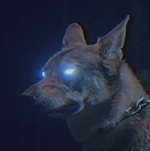 halloween inspiration wolf with glowing eyes