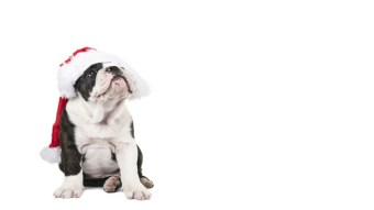 15 Animals Who Are Doing Christmas Better Than You Are