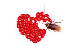 You Can Name A Cockroach After Your Ex For Only $10 This Valentine's Day