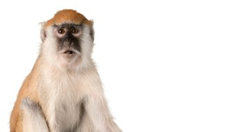 Celebrate Monkey Day With These Hilarious Memes
