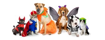 The 10 Greatest Dog Costumes For Your Pet