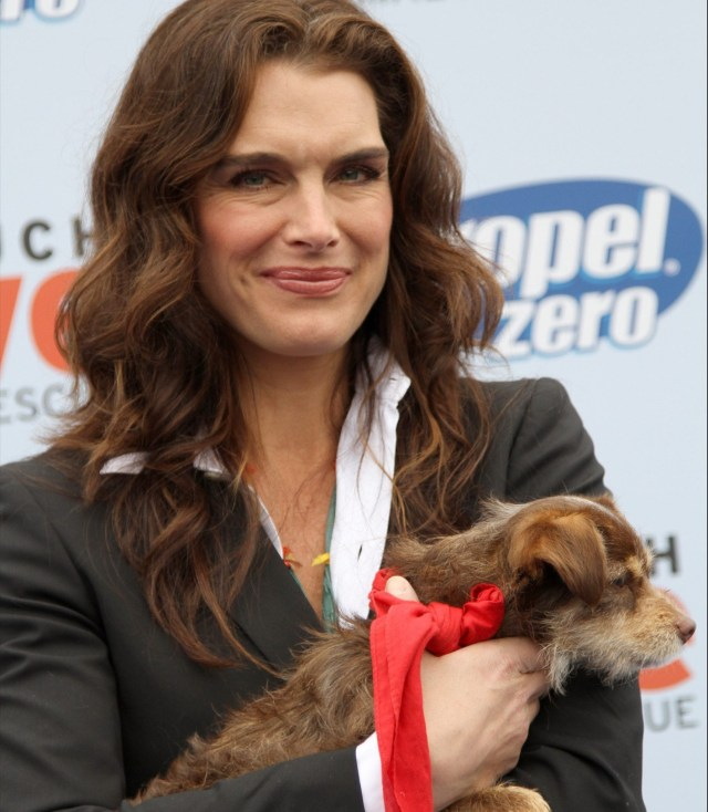 """Brooke Shields """"Propel Zero to 1000"""" Celebrity Dog Walking event hosted by Cindy Crawford, held at Church Estate Vineyards Malibu, California - 02.04.11 Featuring: Brooke Shields Where: California, United States When: 02 Apr 2011 Credit: WENN"""