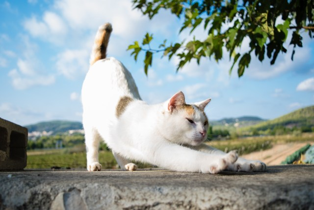 cat stretching outside