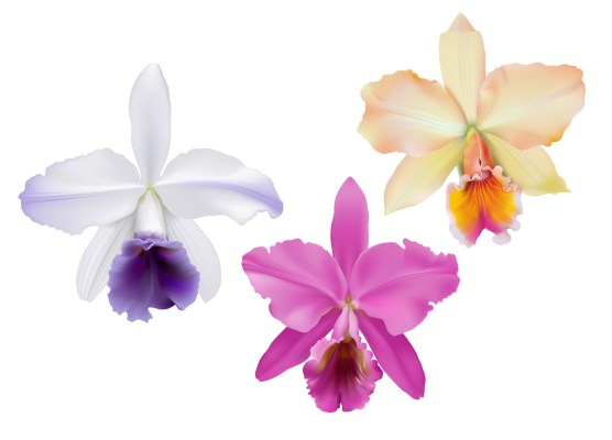 Third colored orchids. From left to right: white with purple accents, pink, yellow with pink accents.