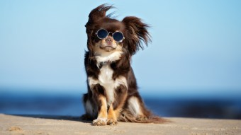 Top 5 Dog Instagram Accounts To Follow