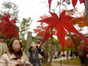 Students and leaves