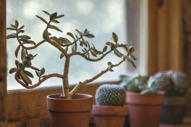 Image shows plants that are an essential segment to survive dorm life.
