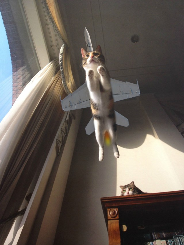 cat-day15