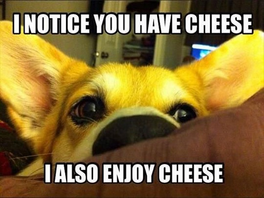 cheese-dog