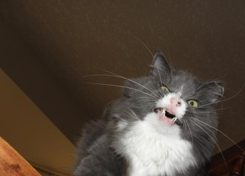 funniest-cats-sneeze-11