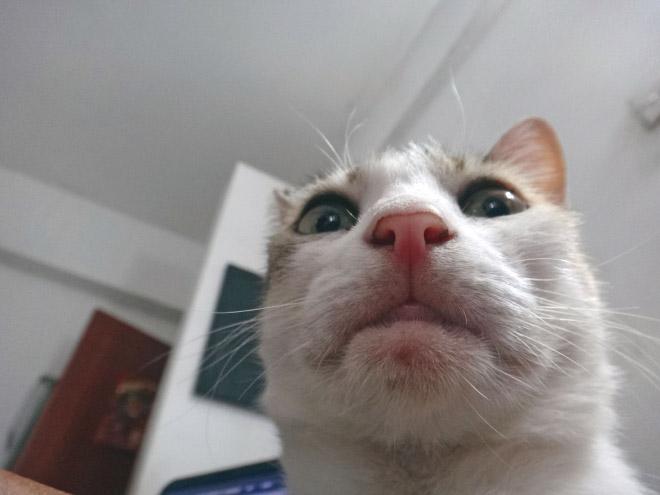 funny-cat-selfies-14