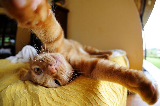 funny-cat-selfies-18