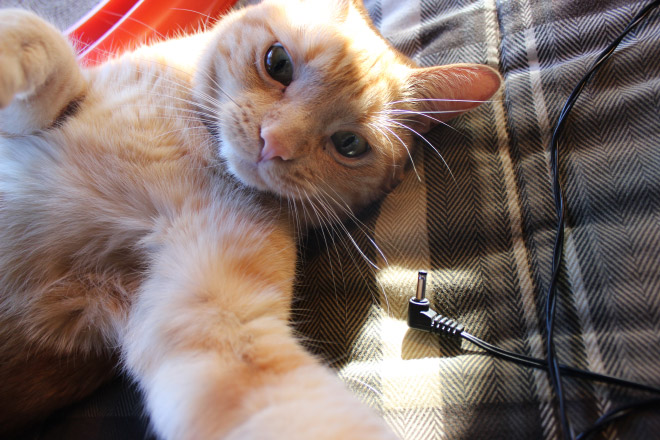 funny-cat-selfies-9