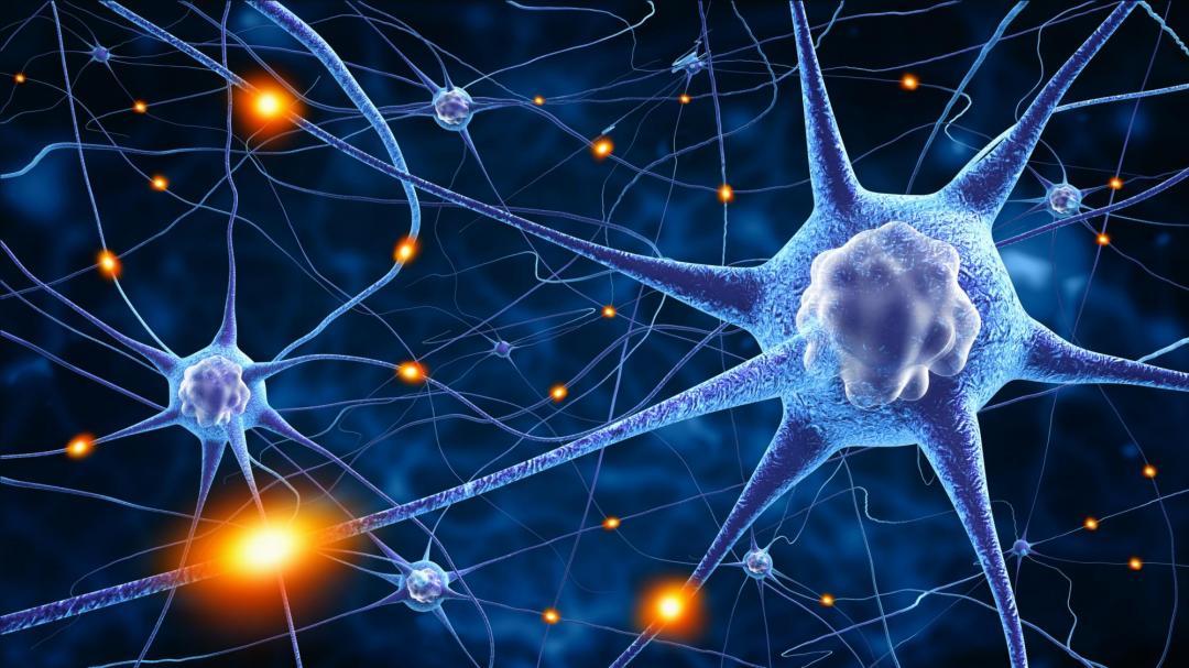 connexion-neuronale