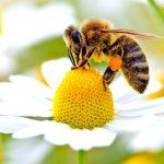 The Bee's Needs