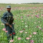 A Look Inside HortSoc's Opium Garden | Turbine