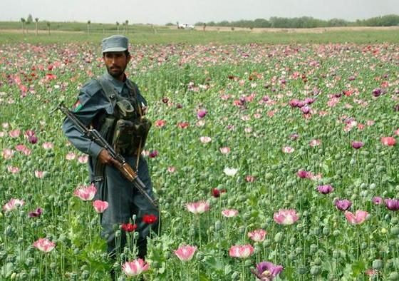 Opium Garden