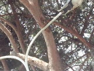 pino e lampione