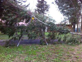 albero parco di Via Gori