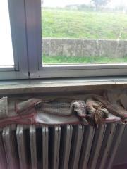 reportage-m5s-scuola-media-collesalvetti-cenci-sui-radiatori