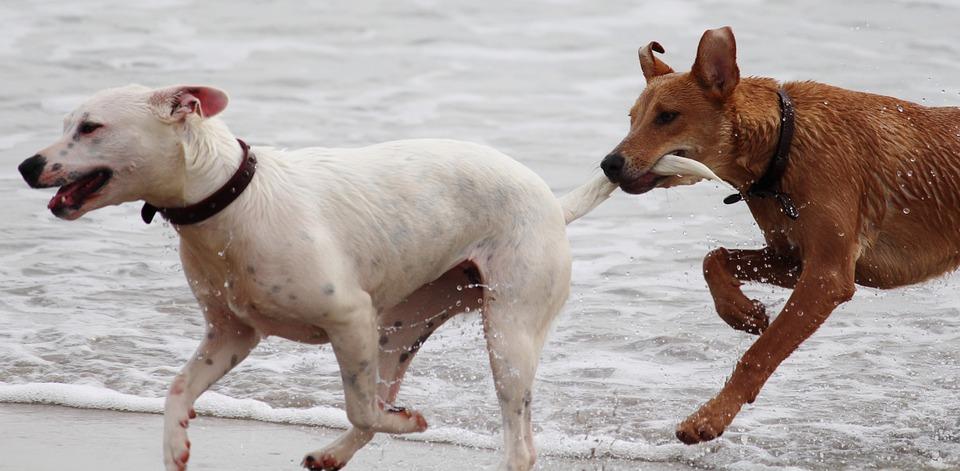 VIAGGIARE ASSIEME AI PROPRI ANIMALI DA COMPAGNIA: ECCO COSA C'È DA SAPERE