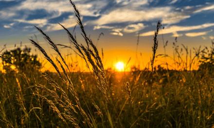 AGRICOLTURA, DALLA REGIONE OLTRE 18 MILIONI E MEZZO DI EURO PER FINANZIARE 49 PROGETTI DEL PSR