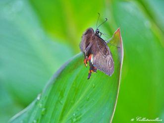 Schmetterling im Schmetterlingspark