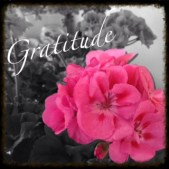 Grateful for Wordpress Themes