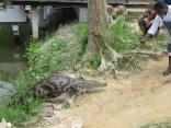 Croc Sanctuary 7