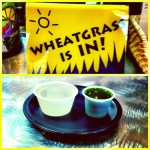 On Wheatgrass