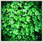 Day 17: Green.