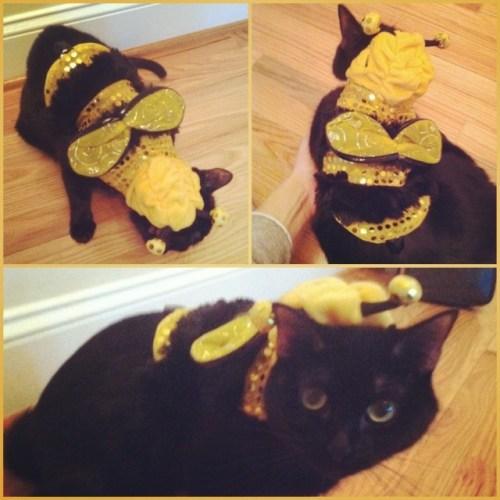 zoe-bumblebee-costume