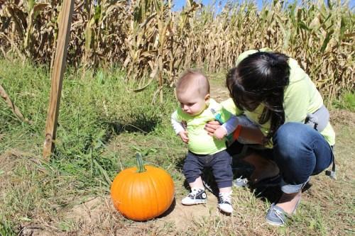 pumpkinpicking-11