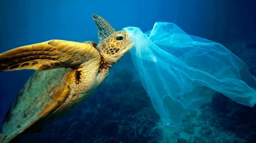 Gebruik van plastic zakken in commerciële sector in Colombia is met meer dan 50% verminderd