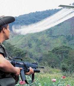 Colombiaanse rechtbank handhaaft verbod sproeien glyfosaat  op cocavelden