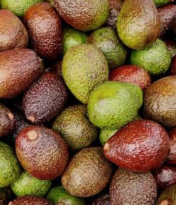 Nederland is de belangrijkste bestemming voor Colombiaanse avocado's