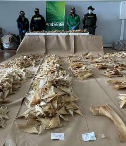 Colombia neemt bijna 3.500 haaienvinnen in beslag op weg naar Hongkong