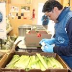 Voluntarios hacen seleccionan los alimentos para entrega de mercados a familias