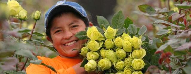 Fairtrade-flower-producer
