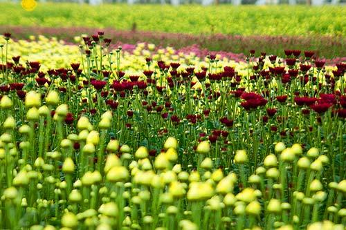 Floricultura