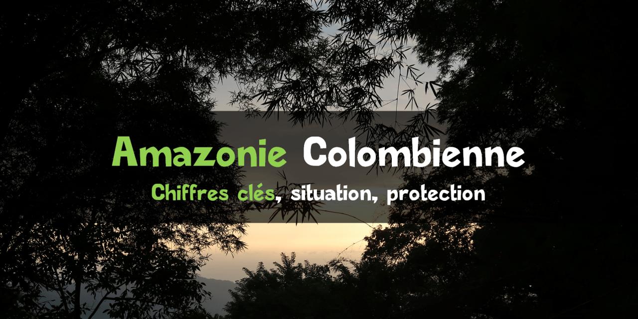 Protéger l'Amazonie colombienne : chiffres, ONG, état actuel de la situation