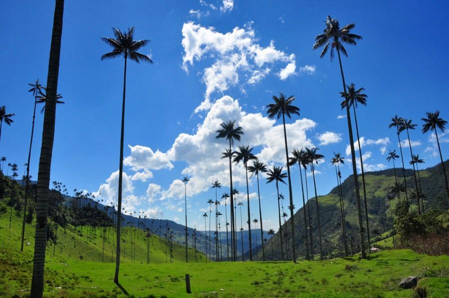 Valle del Cocora, en el Quindío.