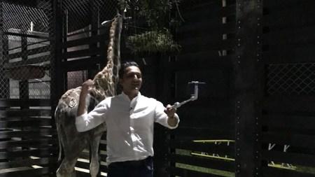 alcalde de pereira jirafa
