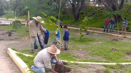 megaplanton arbol bogotá jardín botánico