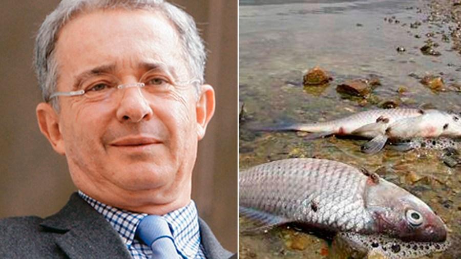 río cauca peces uribe