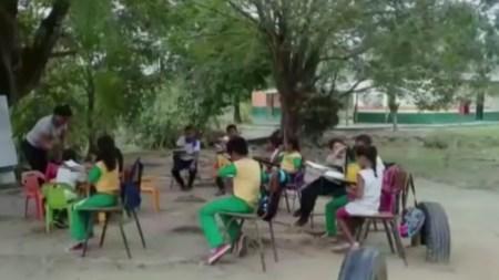 niños clases arbol