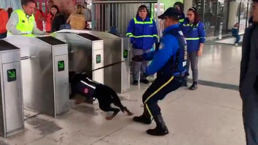 transmilenio perros