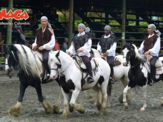 Show-themed-horses-National Park-panaca-coffee-axis