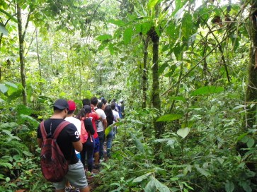 Free Tour Barbas Bremen - Coffee Axis Colombia